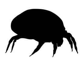 picture of dust mite  - The illustration of a house dust mite - JPG