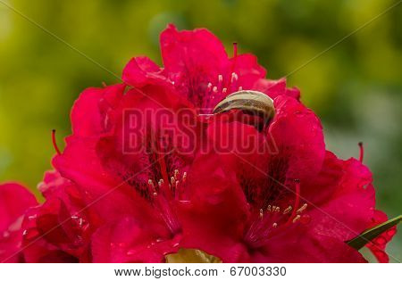 Beautiful Red Bush