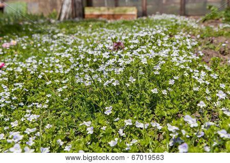 Small Meadow Flowers Macro