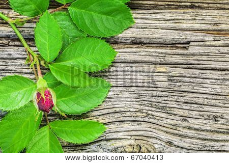 Red unblown rose on old wooden boards