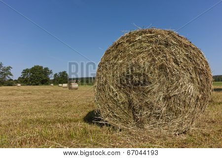 Circular Straw Bales in Field