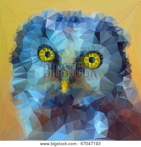 Boreal owl head illustration