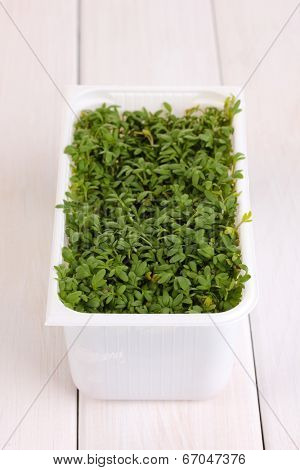 Fresh garden cress in white plastic box on wooden table