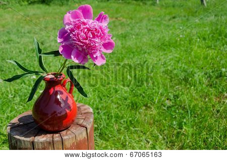 Peony In Clay Handmade Pitcher On Stump Outdoor
