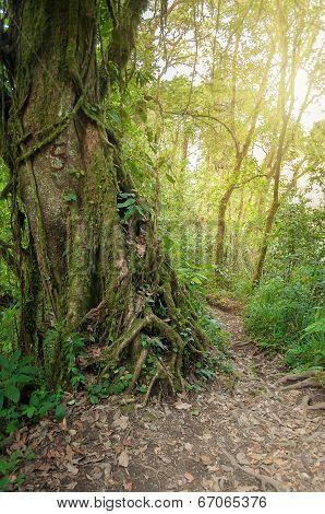 Trail In The Jungle Of The Volcano Merapi