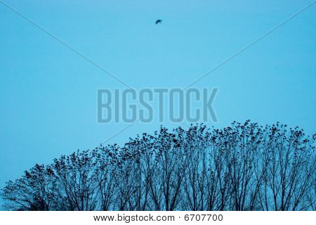 Birds On Trees In the Evening