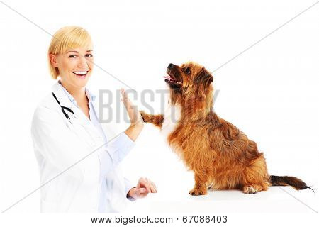 A picture of a dog giving high five to a vet