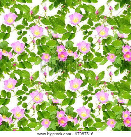 Seamless Pattern Of Dog-roses Flowers