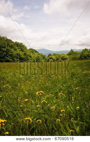 Mountain Meadows along the Appalachian Trail