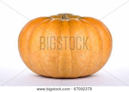 Pumpkin Beauty