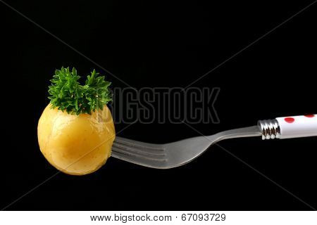Young boiled potato on fork on black background