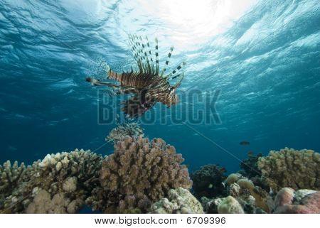 Peces tropicales y arrecifes de Coral