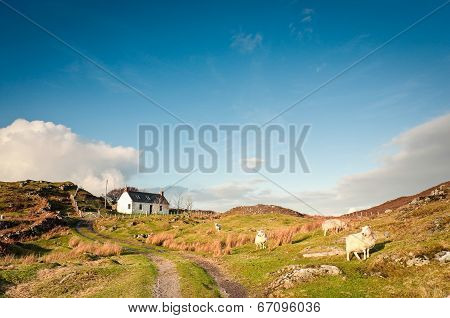Farmland, Scotland.