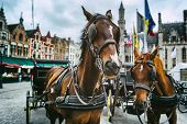 picture of carriage horse  - Horse - JPG