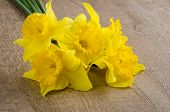 stock photo of jonquils  - Closeup of yellow jonquil flowers on wooden background - JPG