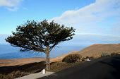 stock photo of juniper-tree  - Gnarled Juniper Tree Shaped By The Wind at El Sabinar - JPG