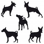stock photo of miniature pinscher  - Five Miniature Pinscher black silhouettes - JPG