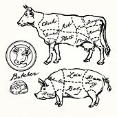 picture of beef shank  - pork and beef cuts  - JPG