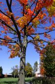 Colorful tree and historic church poster