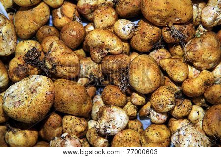 The white truffle
