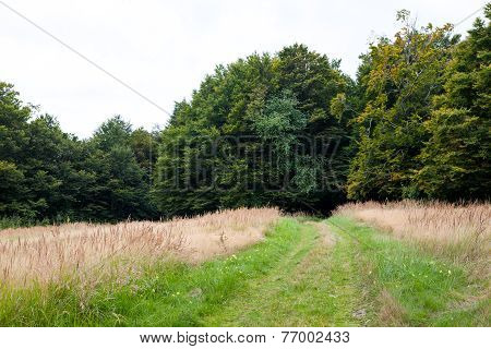 Green Forest Way