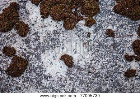 Moss-grown Concrete Surface
