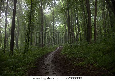 The Path In A Green Forest In Foggy Weather