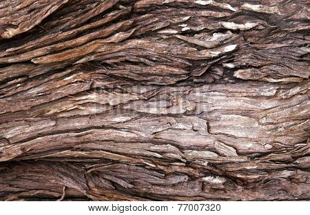 Patterns And Textures On Wethered Tree Trunk