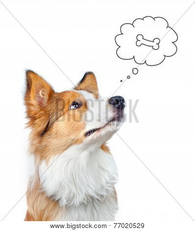 Border Collie Dog Dreaming Of Food