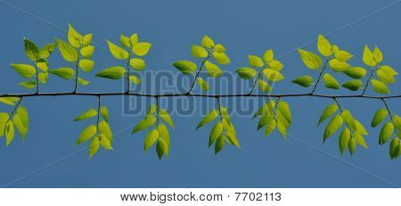 Green leafs under the blue sky