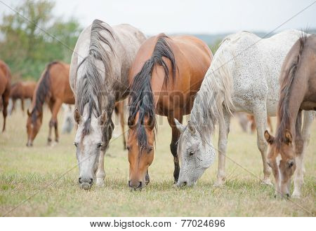 horse graze