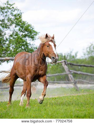 Horse Galloping At Ranch