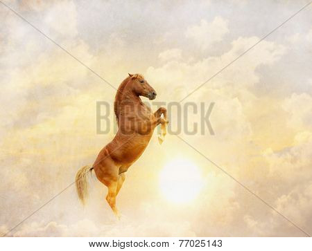 Horse And Sun