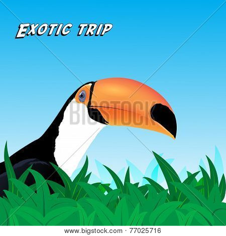 Vector Exotic trip card