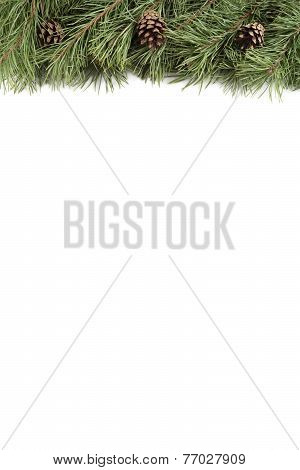 Christmas tree branch and bumps on a white background with copyspace