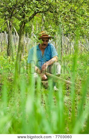 Senior Peasant Making A Break From Digging