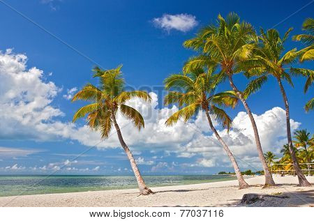 Tropical summer paradise in Key West