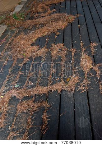 Natural fir needle debris after thunderstorm