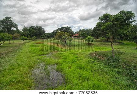 Green Wet Moor Covered With Grass And Trees And A House In A Tropical Park