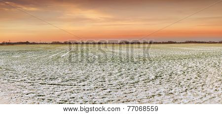 snow fields