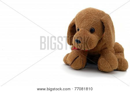 Small Toy dog