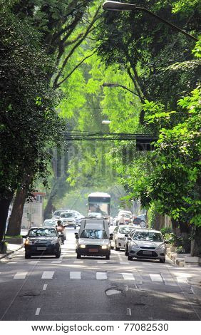 passage of trees on road in Sao Paolo