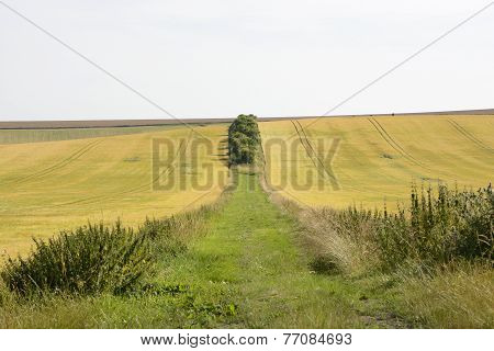 Track Between Fields On South Downs. Sussex. England