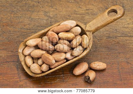 rustic scoop of raw organic cacao beans  against grunge wood table