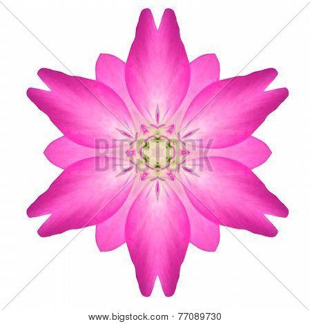 Pink Mandala Flower Ornament Kaleidoscope Pattern Isolated