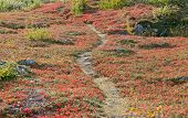 picture of bearberry  - A small path - JPG