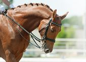 image of horse-riders  - children dressage - JPG
