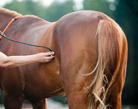 stock photo of horse-riders  - Vet examining horse in a vet control point - JPG