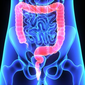 picture of rectum  - The human gastrointestinal tract  - JPG