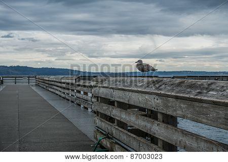 Dash Point Pier 2